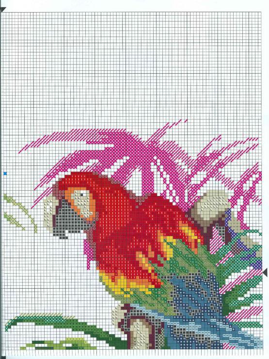 Схемы вышивки «попугаи» - Вышивка крестом 58