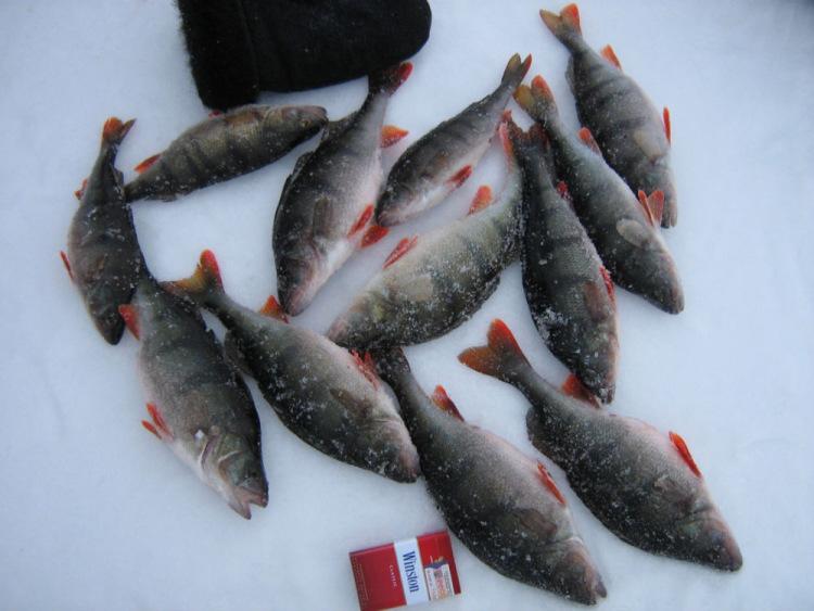 рыбака в леднево